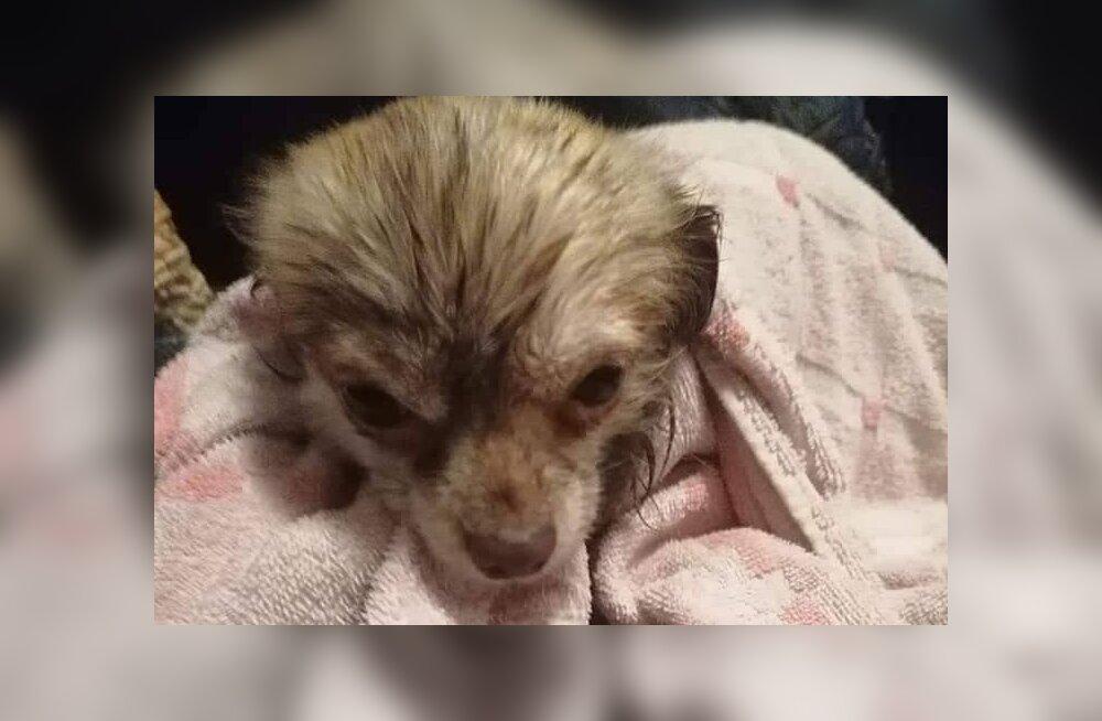 Vapper mees päästis Rakveres tiiki visatud koera