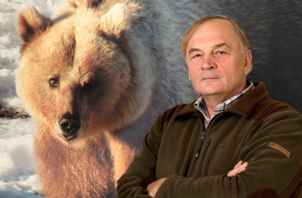 Rakke Jahiseltsi esimehe, RMK metsaparandaja Villu Alatsei sõnul nähakse praegu igal jahil mõnd karu.