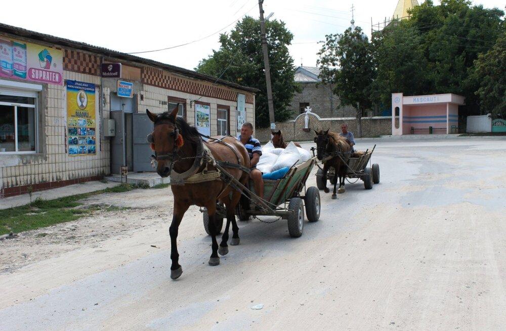Moldova külaelu 2016 koos hobuste, lehmade ja hanedega