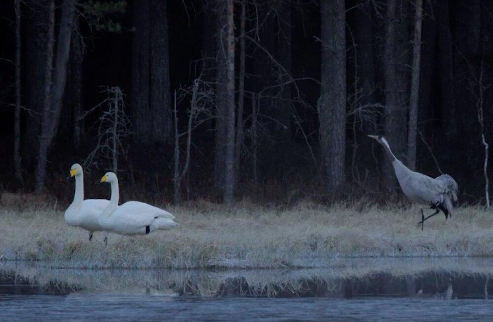Imeilus isamaa | Rända Eesti loodusfilmi radadel
