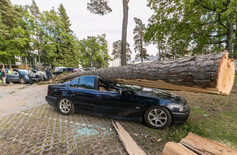 Tugeva tuulega kukkus Laulasmaal puu auto peale