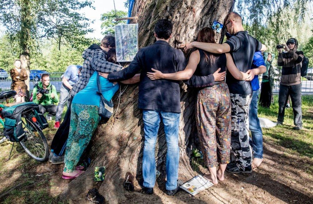 Kired ümber Haabersti puu