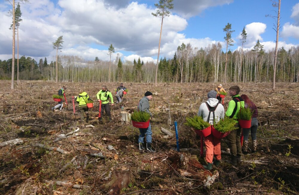 Metsaühistute metsapäevadel pandi erametsadesse kasvama üle 25 000 puu