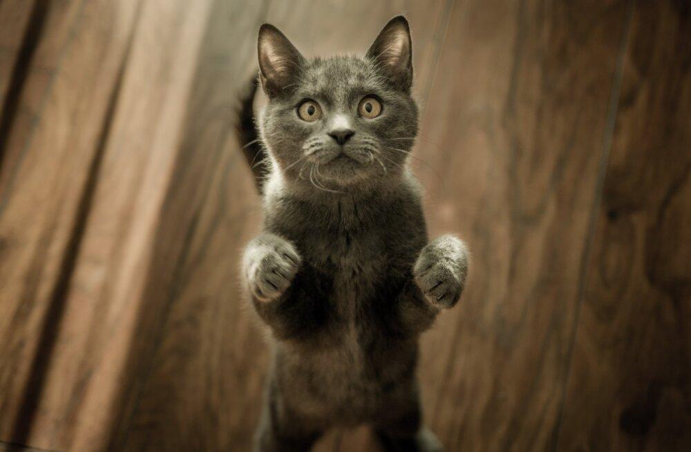 6 особенностей жизни с котом, которые надо знать даже опытным котоводам
