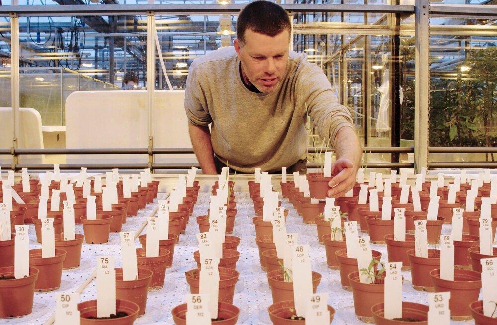 Kosmosetoit: katse näitab, et Kuul ja Marsil saab edukalt mitmeid põllukultuure viljeleda