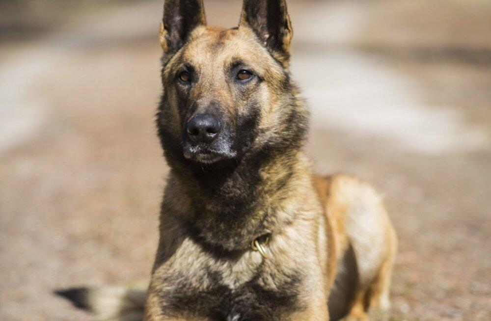 Служебная собака Начо отыскала в лесу девочку, чья жизнь была в опасности