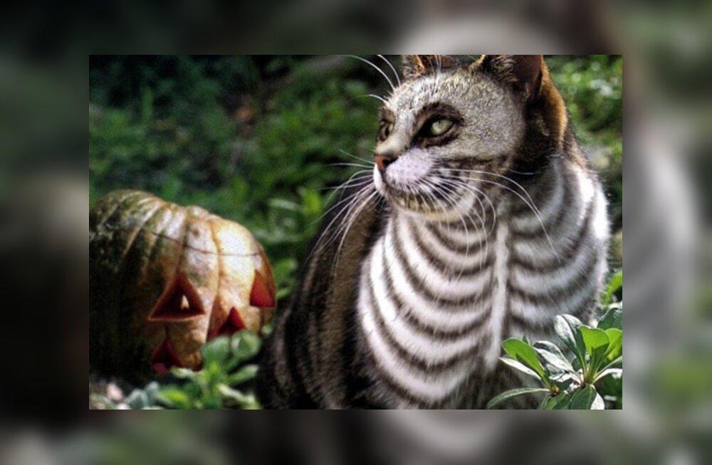 f251f8f4264 FOTOD: Kas oled halloweeniks valmis? 9 silmapaistvat ja humoorikat ...