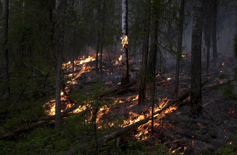 Просто наблюдают за тем, как все сгорает. Как и почему горят сибирские леса