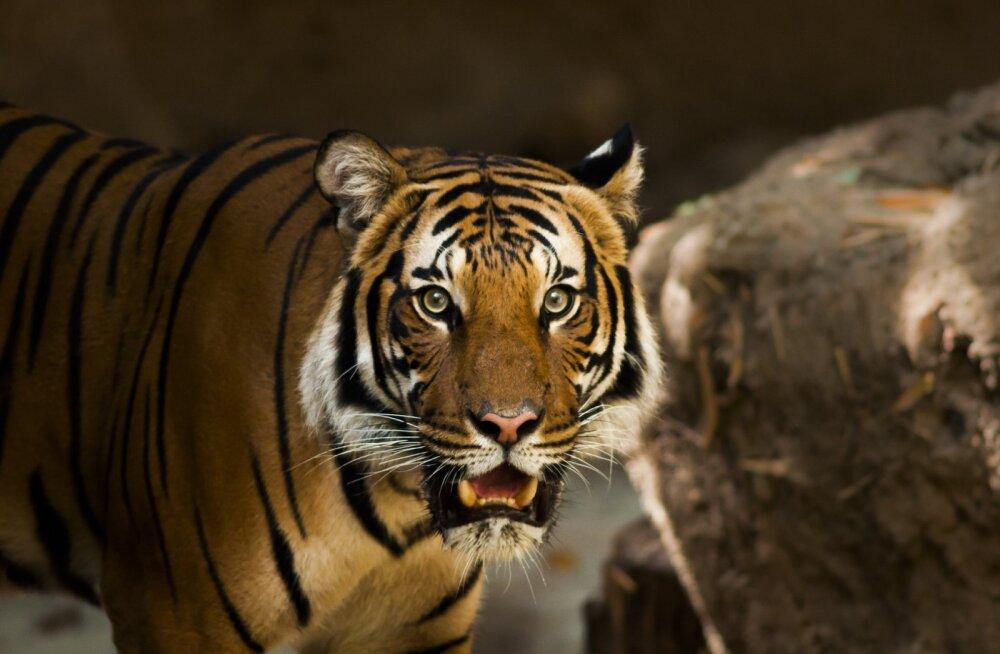 TOP 5 | Need loomad surmavad igal aastal kõige rohkem inimesi
