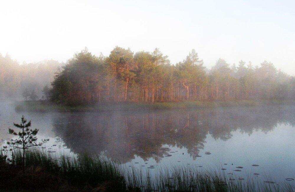 Leili metsalood | Valguse ja vaikuse kutse