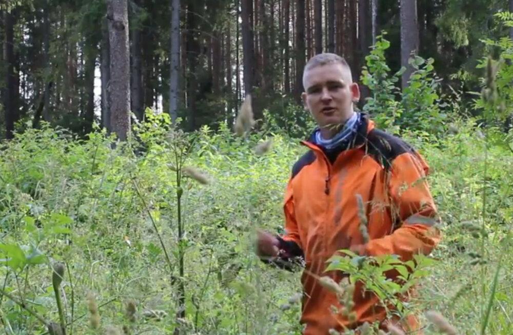 Metsamehed ei ole RMK-ga rahul: tööde hinnad on naeruväärsed ning seetõttu hukkub palju istutatud metsa