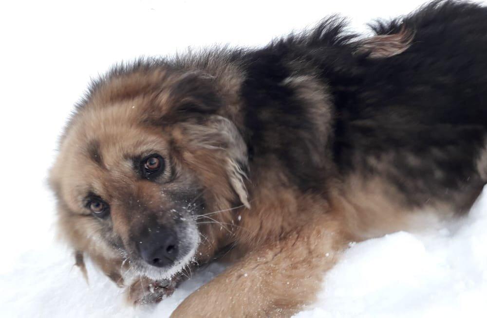 Väärkoheldud koerte lugu: Ida-Virumaalt leiti koerad, keda omanik käis toitmas vaid korra nädalas