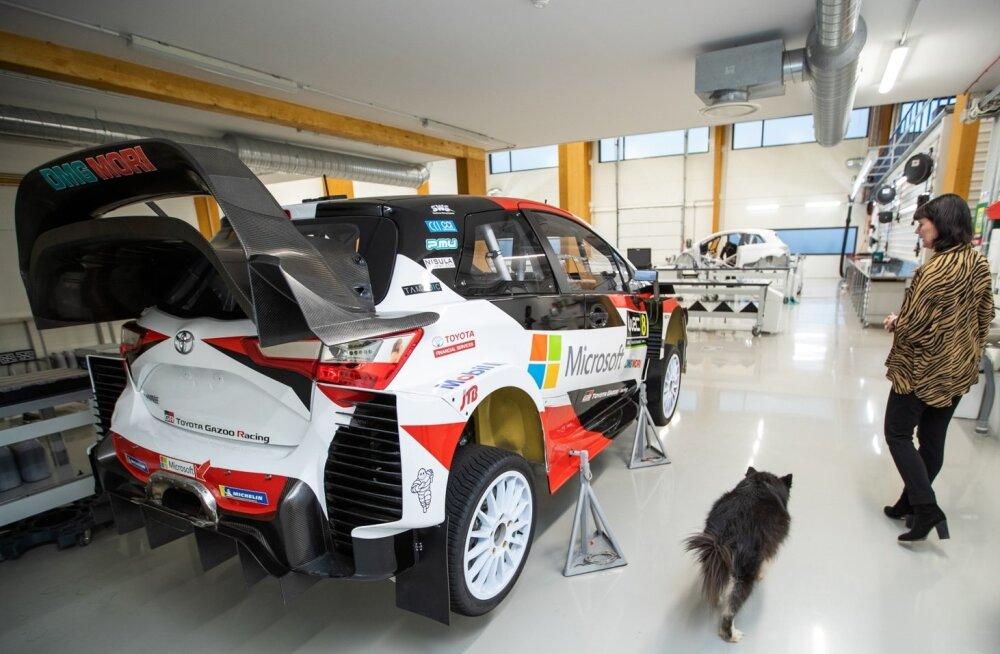 Kui Mia Miettinen on Tallinna tehases, saadab teda tihti nende seitsmeaastane koer Tara.