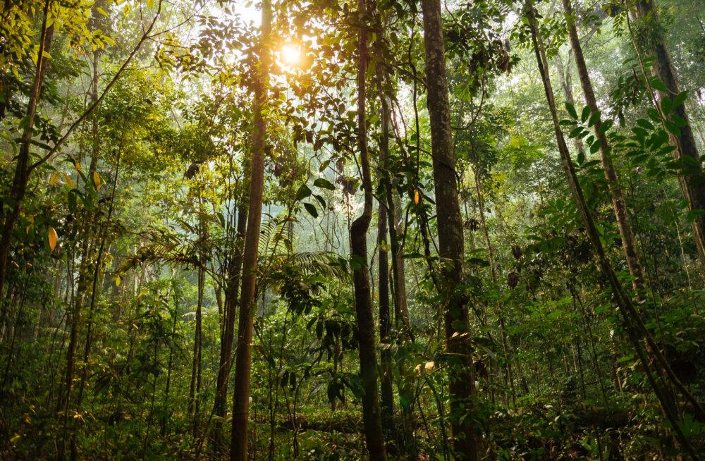Teadlased: meie planeedil on praegu metsa palju rohkem kui 35 aastat tagasi