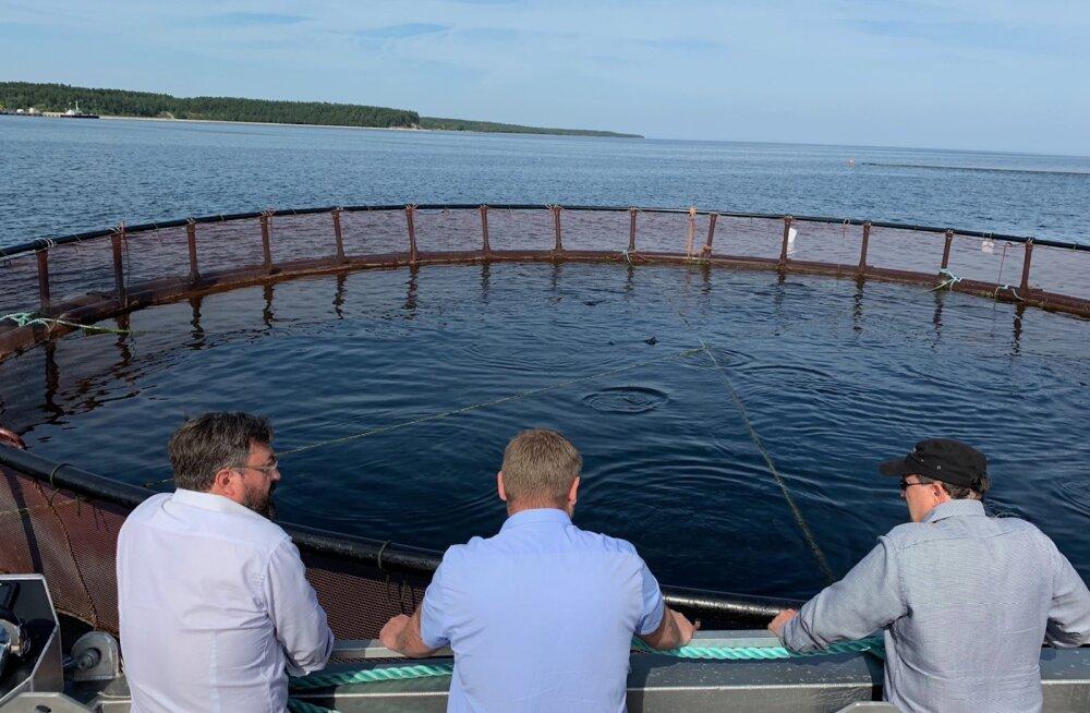 Eesti kalakasvataja: Norra lõhe mürgisusest rääkiv film on kallutatud