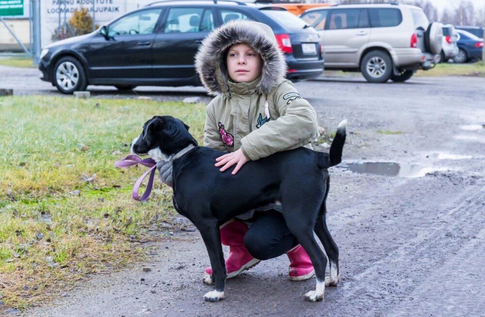 Väike heategija: 11-aastane Eva-Lotta kinkis kogu sünnipäevaraha loomade varjupaigale