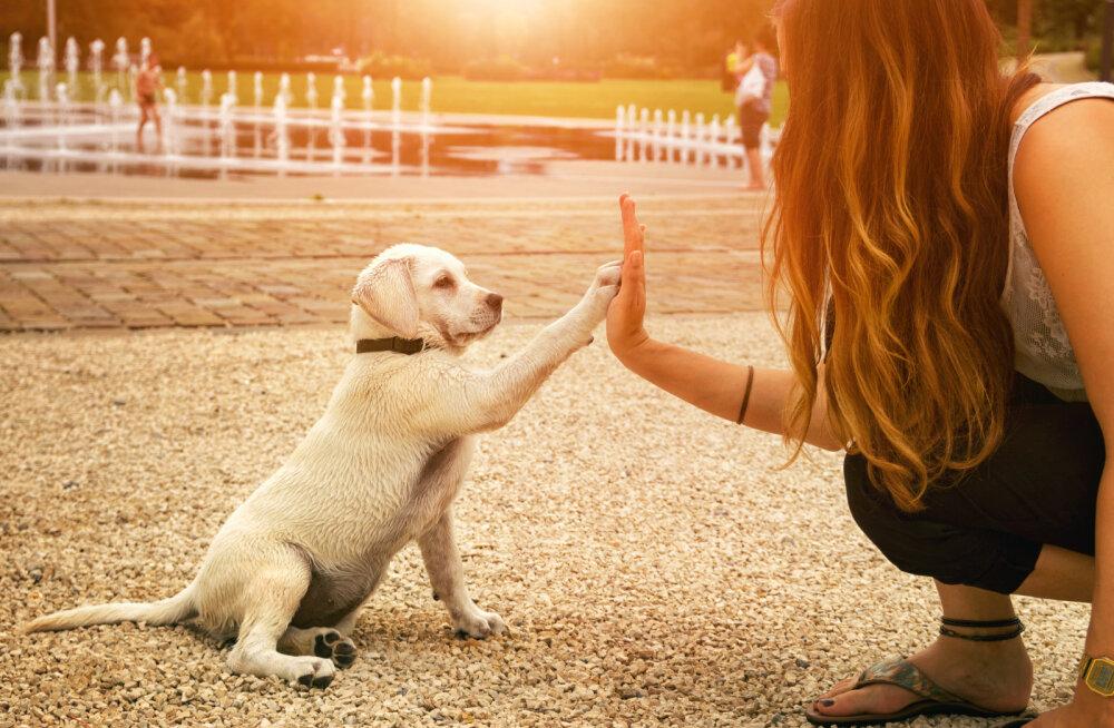 Tõde päevavalgele: Kas tunned end ära? 11 asja, mida iga koeraomanik salaja teinud on