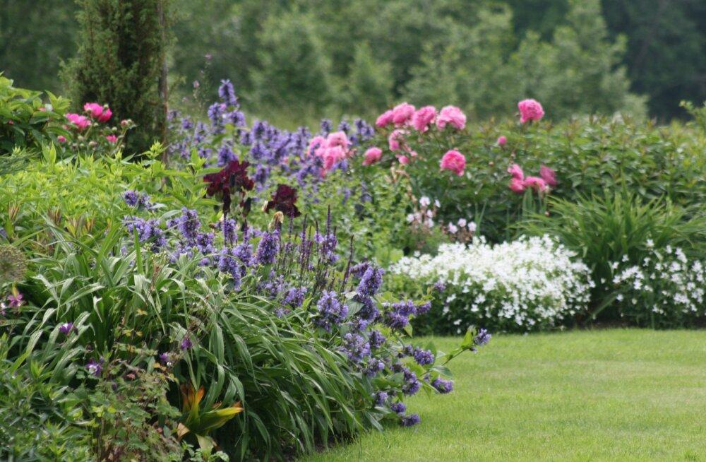 Jäädvustame Eestimaa elu: meie imekaunid aiad