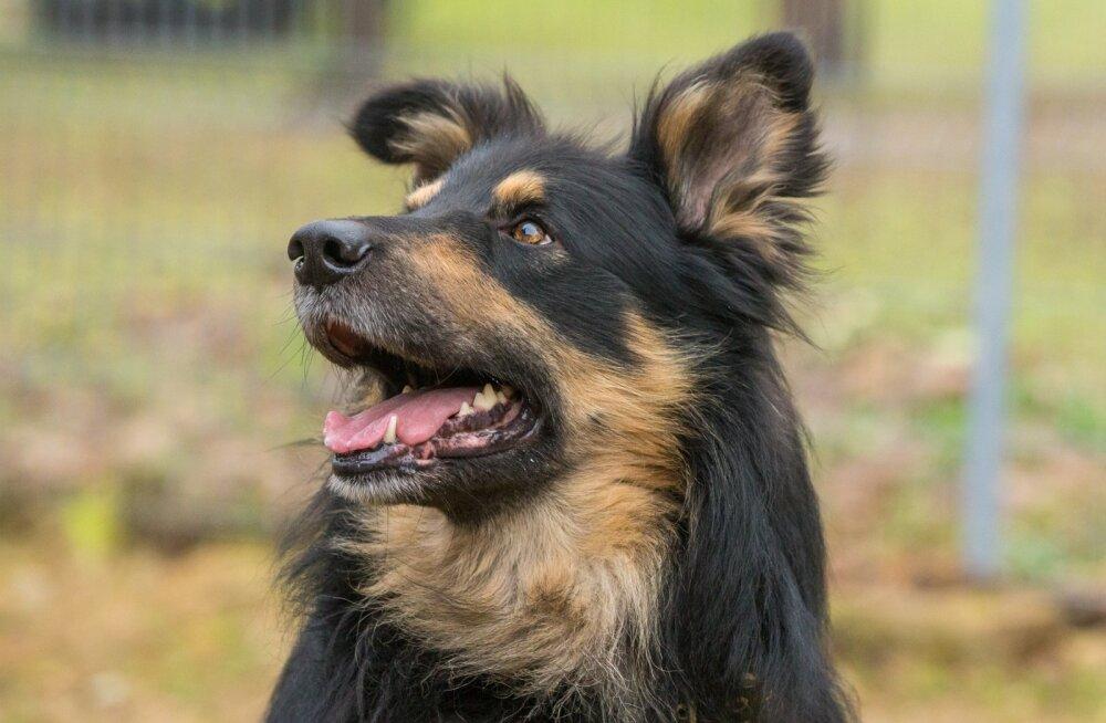 Koduleidja - koer Marsik