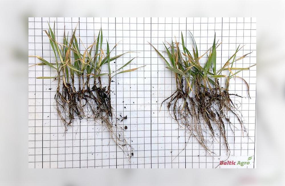Seemnete puhtimine – millele peaksid põllumehed tähelepanu pöörama?