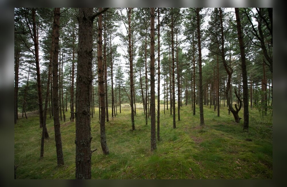 Järvamaal leidis politseikoer metsa eksinud seenelise üles