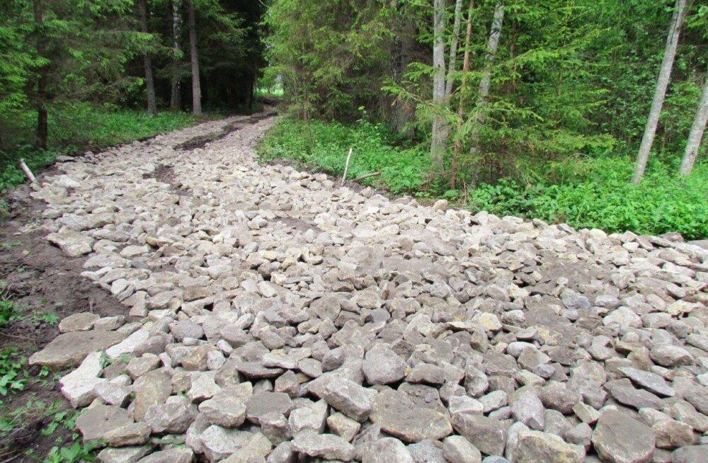 Metsatee edeneb visalt