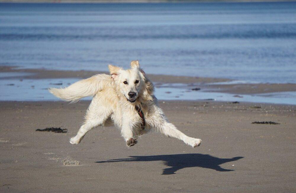 Muuda oma jalutuskäik huvitavamaks: 5 mängu, mida koeraga õues teha