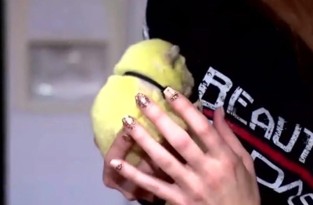 ВИДЕО | В Америке родился желто-зеленый щенок. Его назвали Халк