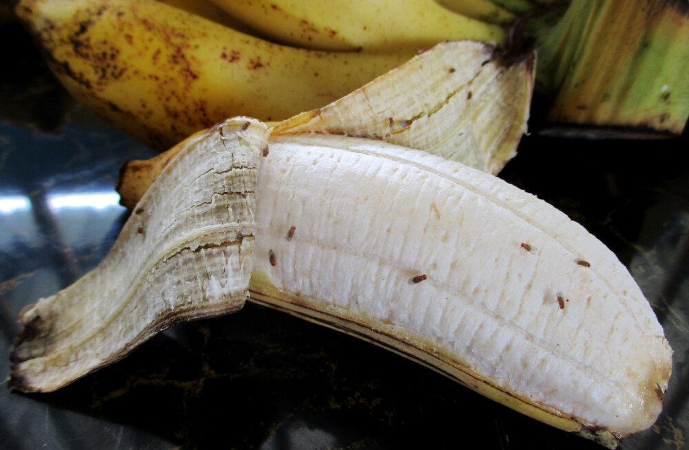 Soovid puuviljakärbestest vabaneda? Vajad selleks ainult kahe koostisosaga vedelikku