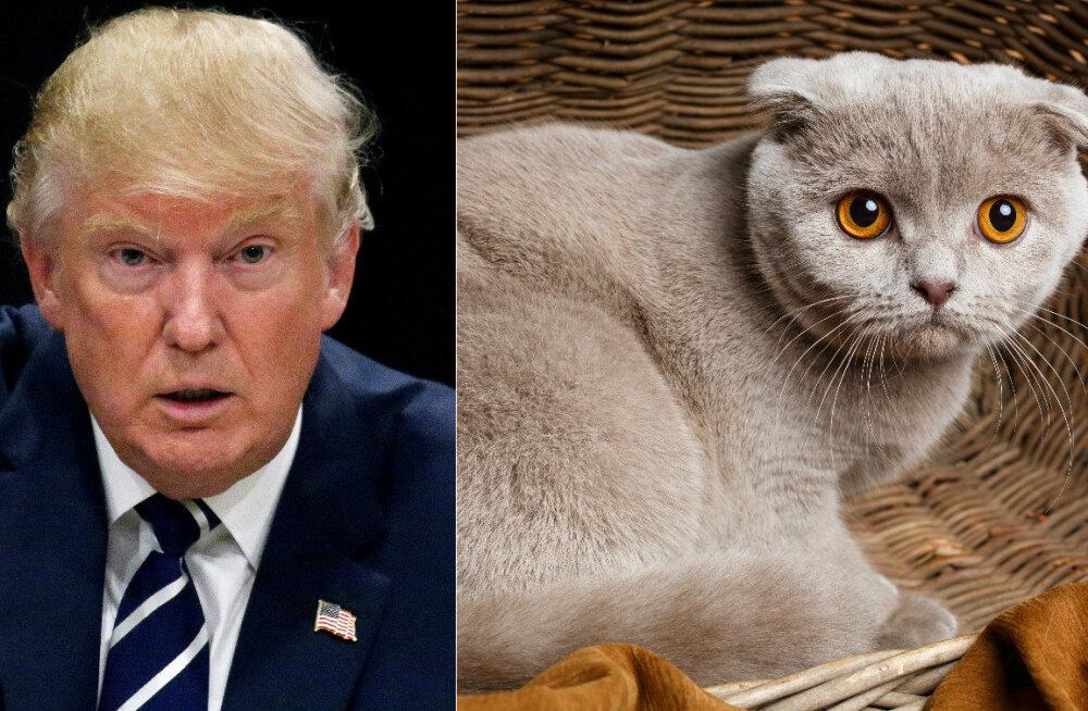 Nunnumeeter põhja ja Trumpimeeter nulli: uus Google Chrome'i rakendus asendab kõik pildid Donald Trumpist kassipoegadega