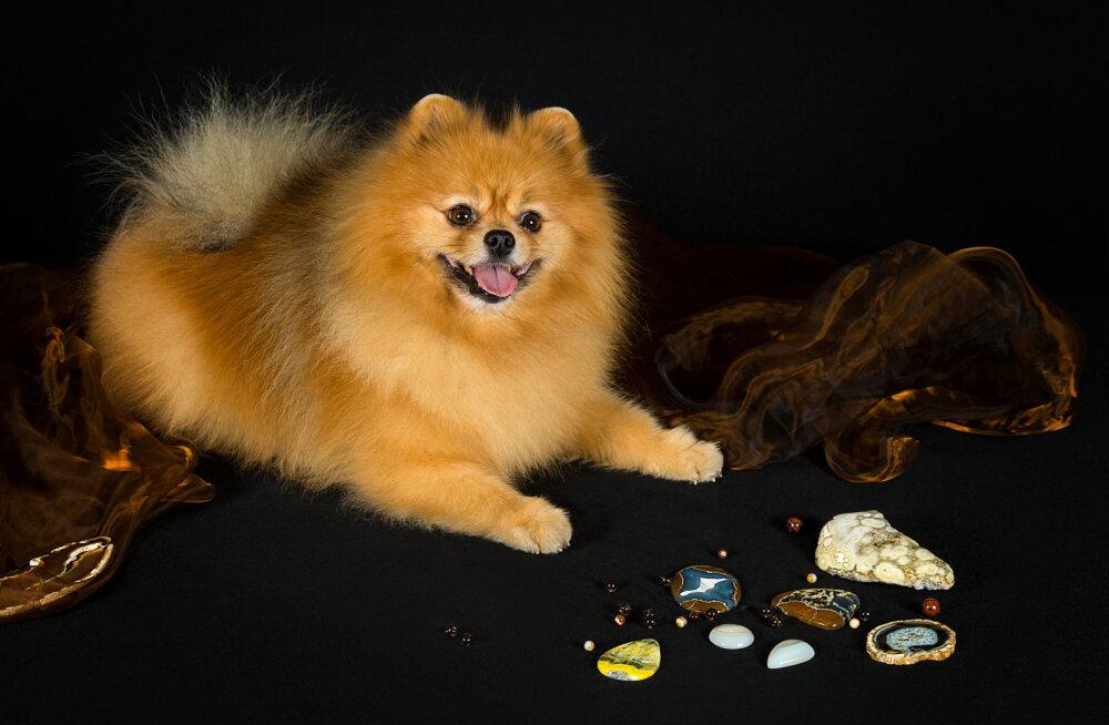 Счастливые камни года Собаки