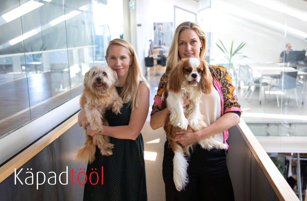 KÄPAD TÖÖL | Baltika moemajas on ka koertel sõnaõigus: Ben ja Julius teavad kodumaisest moest kõike