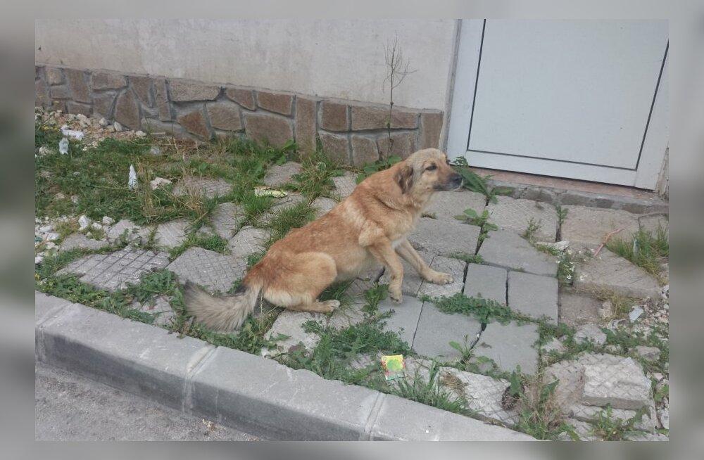 Koerad tulevad Bulgaarias süüa küsima