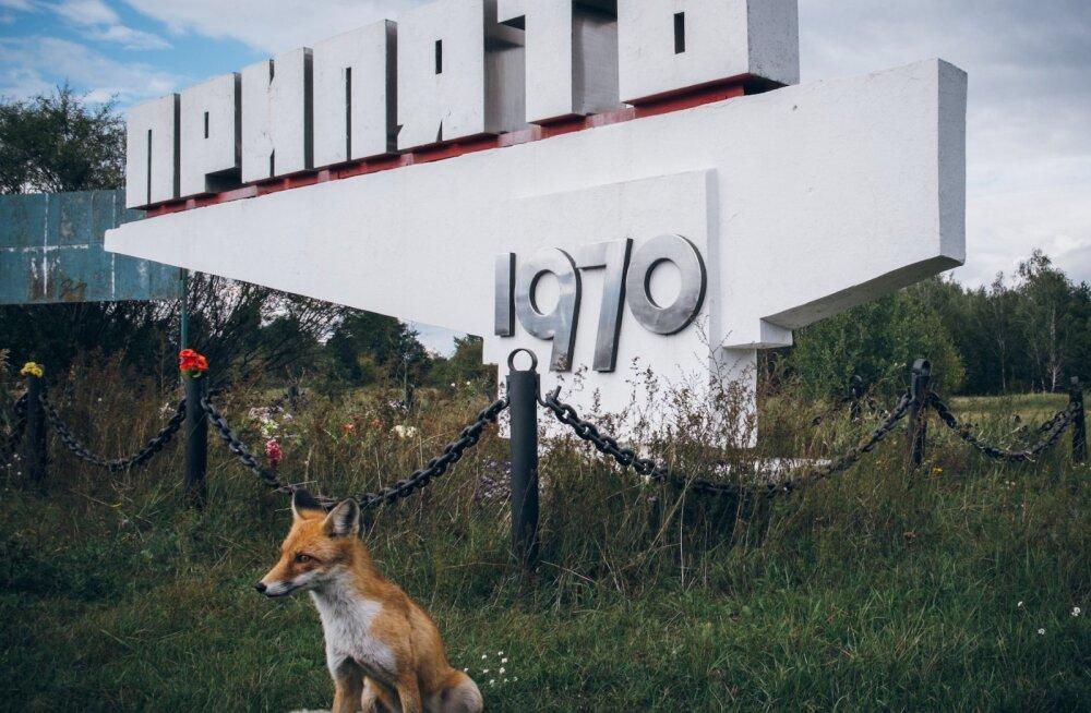 Tšernobõl täna: kõik on vist parem, kui inimest pole