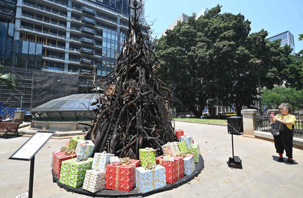 В Австралии установили елку из сгоревших деревьев