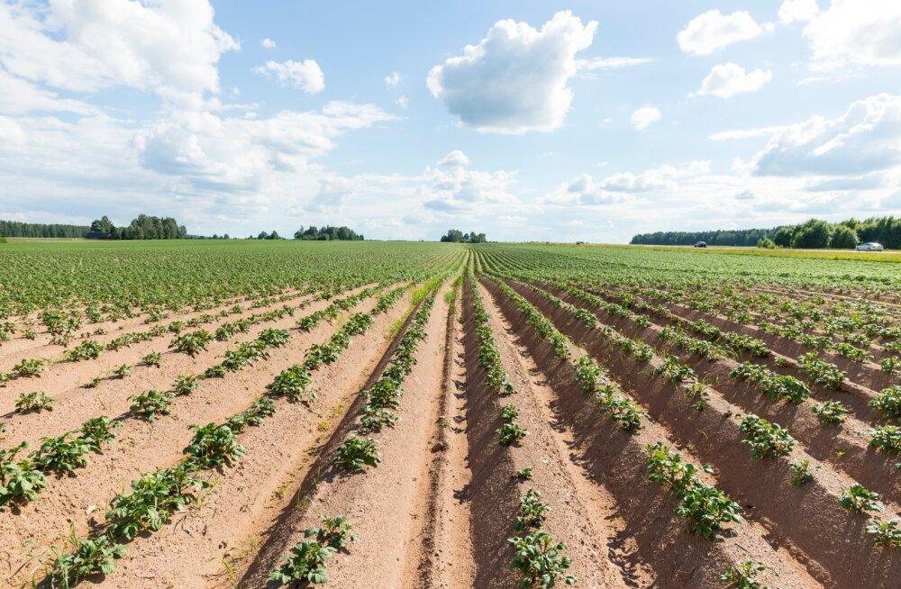 Põllumajandus on üks väheseid tootmisharusid, mis sõltub otseselt taevast.
