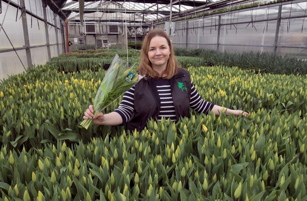 """Riketsi aiandi peaagronoom Getriin Hermlin tõdeb, et tulp ei ole populaarsust kaotanud. Üha enam eelistatakse eestimaist, mistõttu on tulpide pakend tähistatud märgiga """"Eestis kasvatatud""""."""