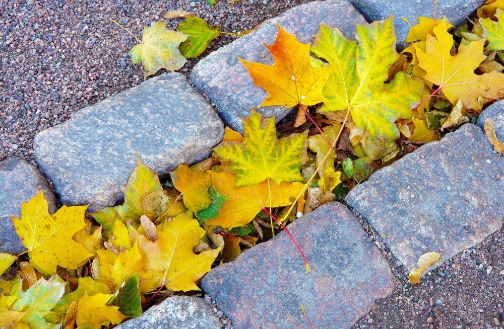 IDEE | 7 nutikat võimalust sügiseste lehtede kasutamiseks