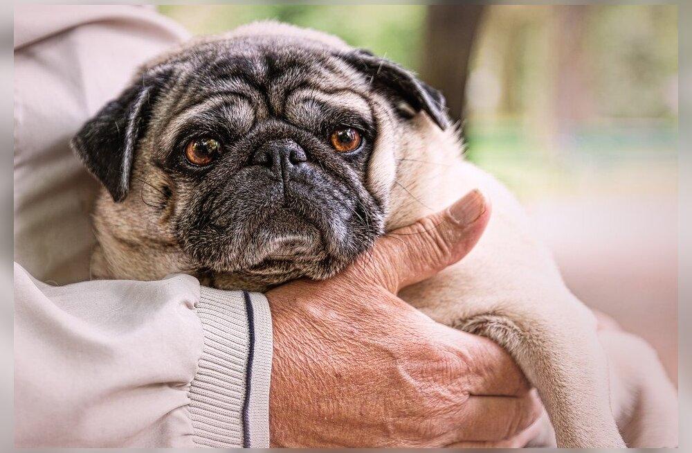 Nõuandeid, kuidas vananeva koera eest väärikalt hoolt kanda