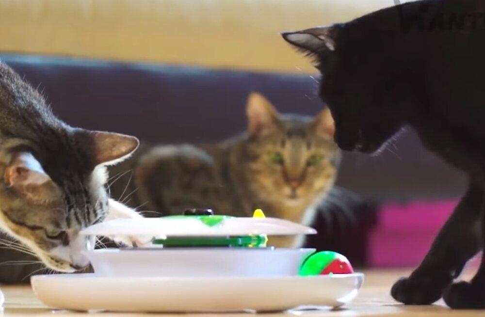 5 простых вещей, которые должны продлить жизнь кошке