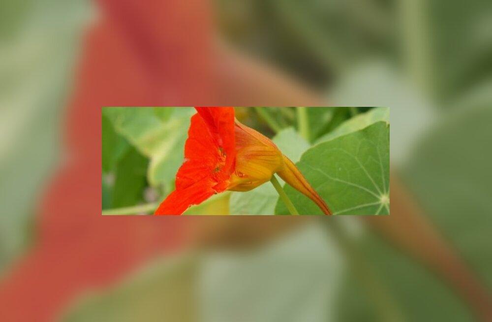 Mungalill hoiab kaua noorena ja tervena