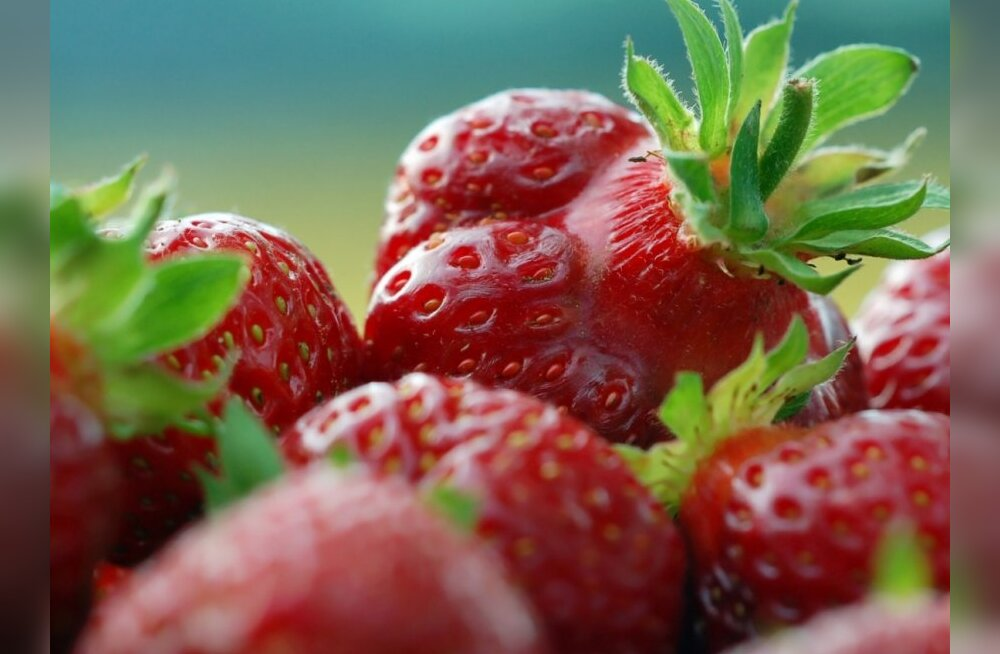 Suvine iluhooldus maasikatega