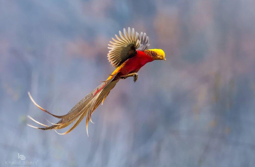 Küttimise tõttu ähvardab suuri linde kiirem väljasuremine