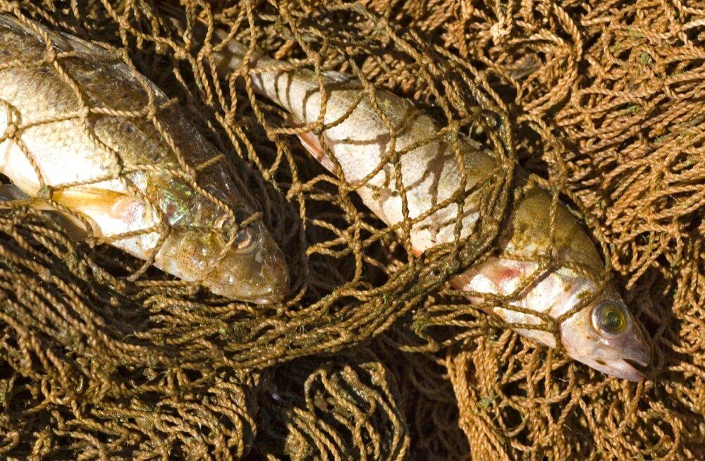 Uues arengukavas selgitatakse, kuidas peaks välja nägema nii põllumajanduse kui kalanduse tulevik.