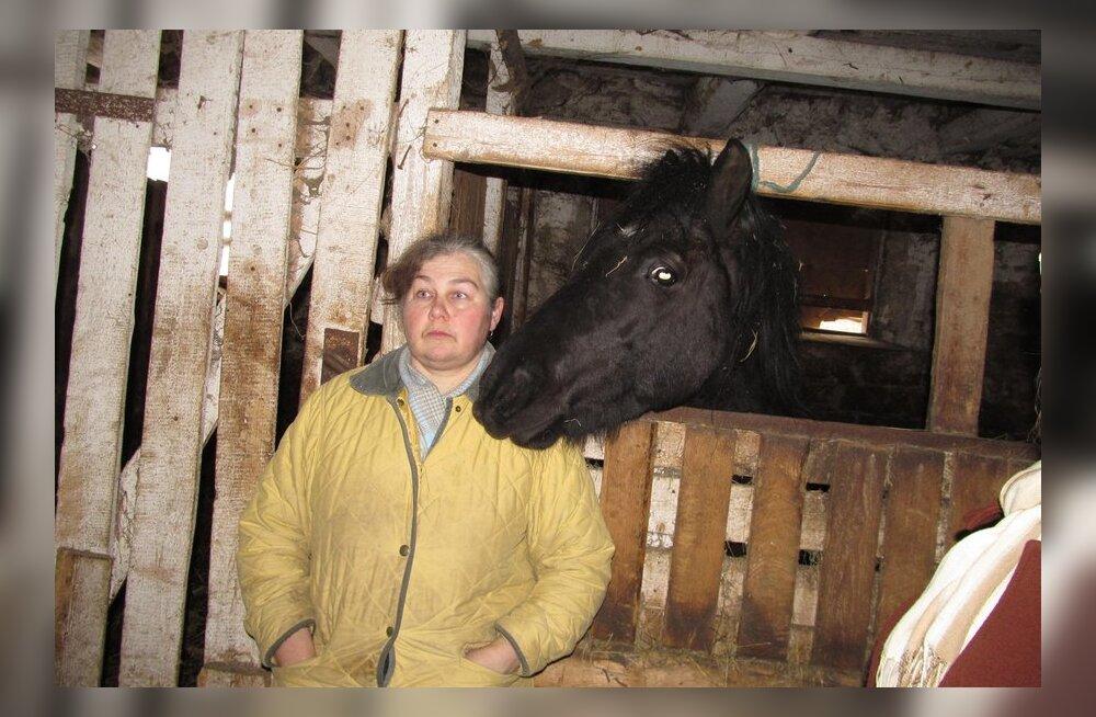 FOTOD: Maasi hobused jäävad omanikule alles?
