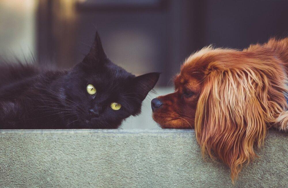 Kas koer võib kassi vastu allergiline olla?