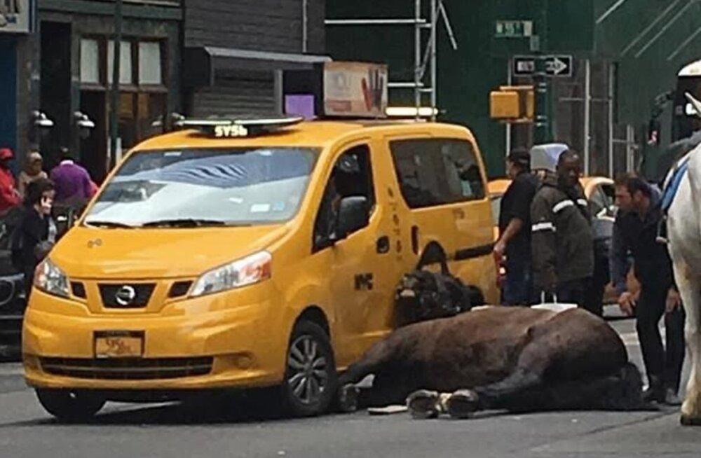 Šokeeriv õnnetus: hirmunud hobune põrkas Manhattani tiheda liiklusega tänaval taksoga kokku