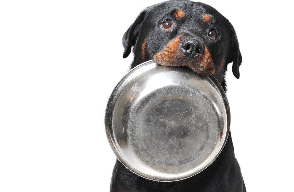 Valid koerale valmistoitu? Mõned tähelepanekud, mida kindlasti jälgima peaks