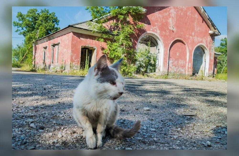 FOTOD: Vaata, kuidas elab Eesti kuulsaim kummituslinn Viivikonna