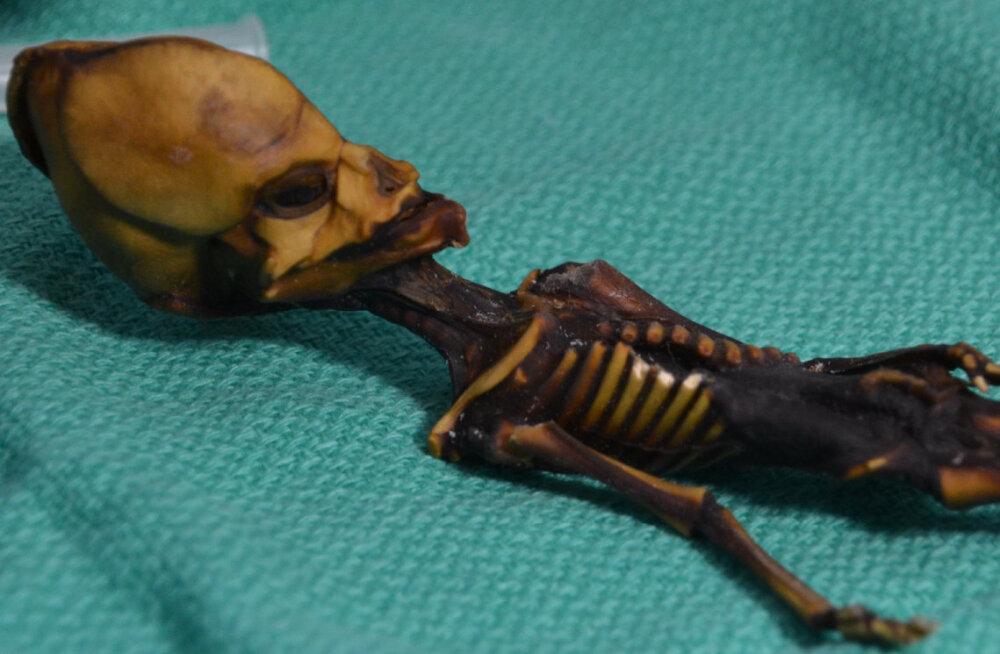 """Atacama """"tulnuka"""" skeleti uurimine vihastas kohalikud arheoloogid korralikult välja"""